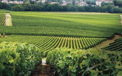 Journée des vignerons encaveurs 2018